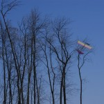 Squirrel plane heads for the treetops.